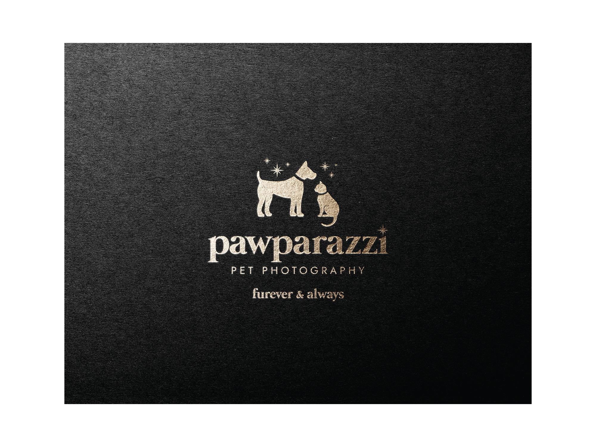 Pawparazzi Winnipeg Feminist Brands Website Design Feminist Entrepreneurs Brand Presentation